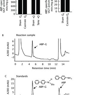 Kinetics of A.A glucuronidation by HLM. The Eadie–Hofstee