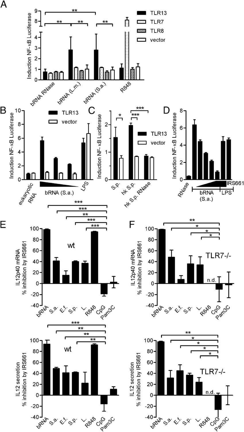 TLR13 is activated by bRNA and required for full DC