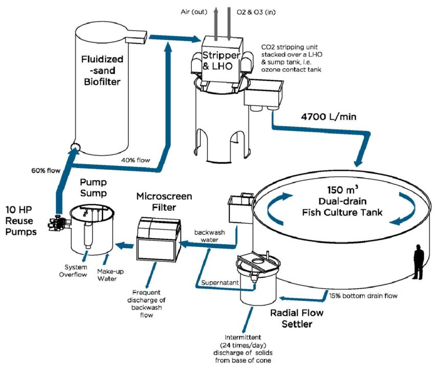 Sketch of a recirculating aquaculture system (RAS) for