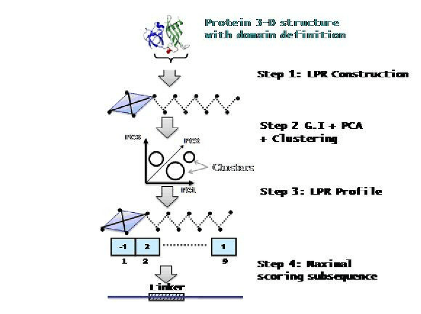 Schematic for protein linker demarcation: (i) Based on