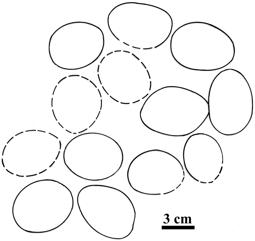 A schematic diagram showing position of eggs in the nest