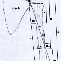 Radial Nerve Diagram Car Dome Light Wiring A Showing The Points And Lines Of Measurements Download Scientific