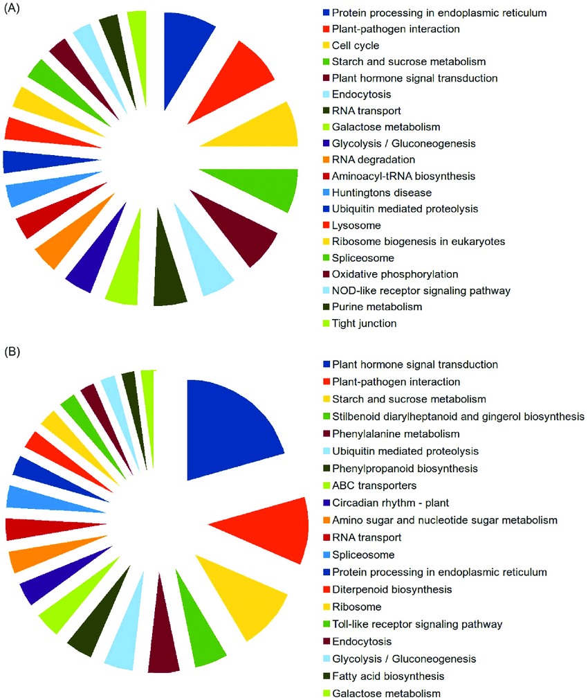 hight resolution of top 20 kyoto encyclopedia of genes and genomes kegg pathways up regulated