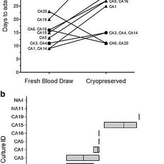 (PDF) In vitro adaptation of Plasmodium falciparum reveal