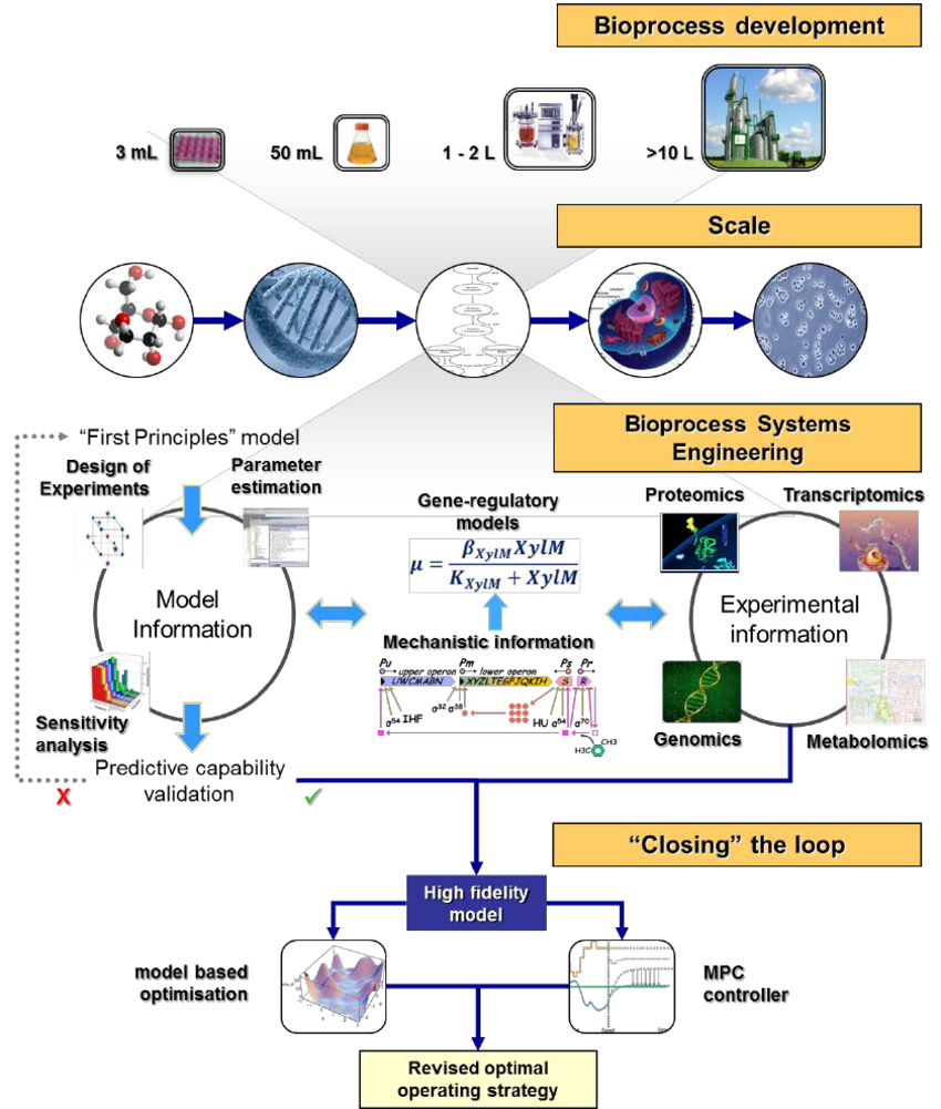 medium resolution of a bioprocess systems engineering framework for model development in biological systems