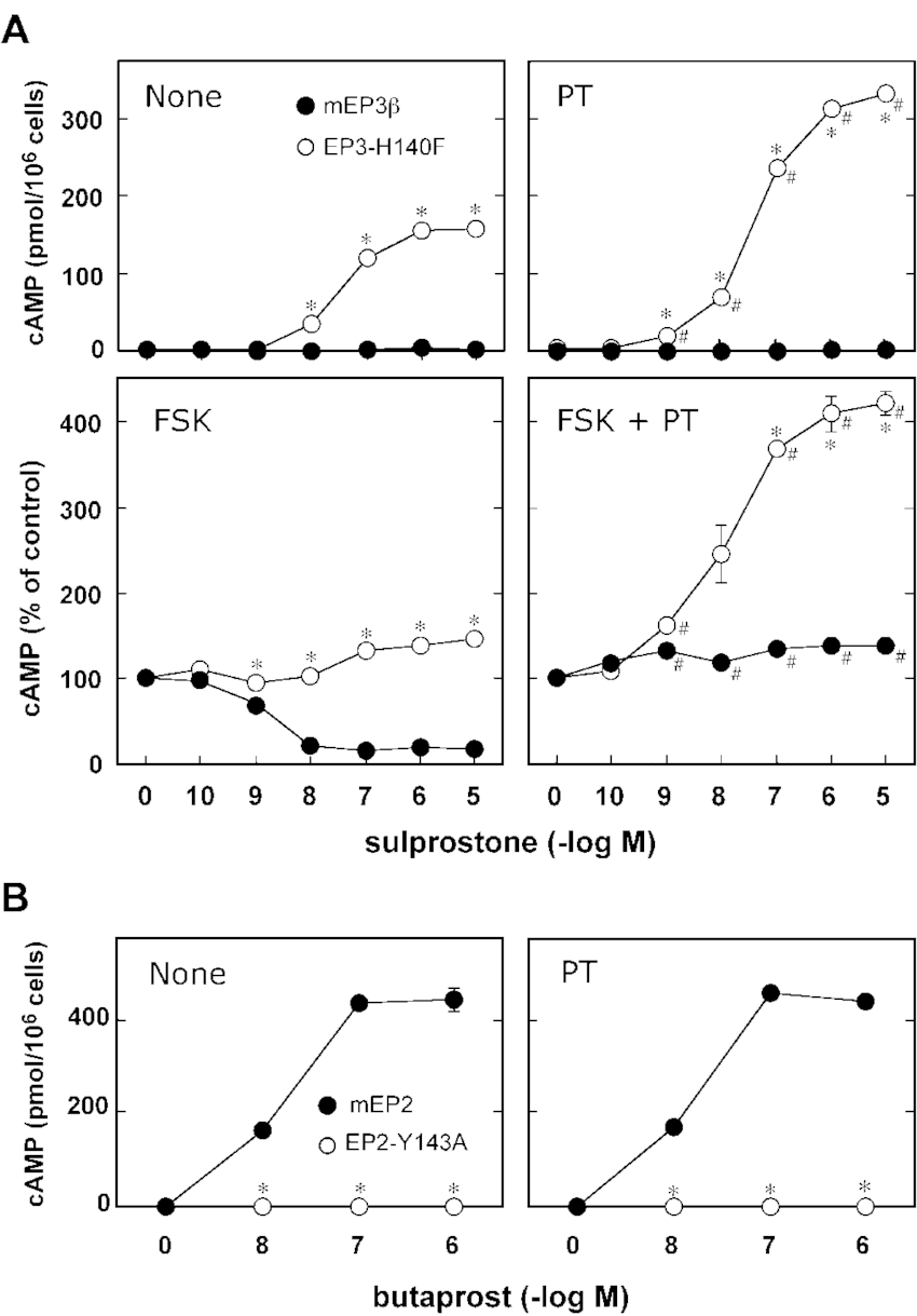 hight resolution of pertussis toxin treatment augmented agonist induced camp accumulation in cho cells expressing the ep3 h140f but not in cho cells expressing ep2 y143a