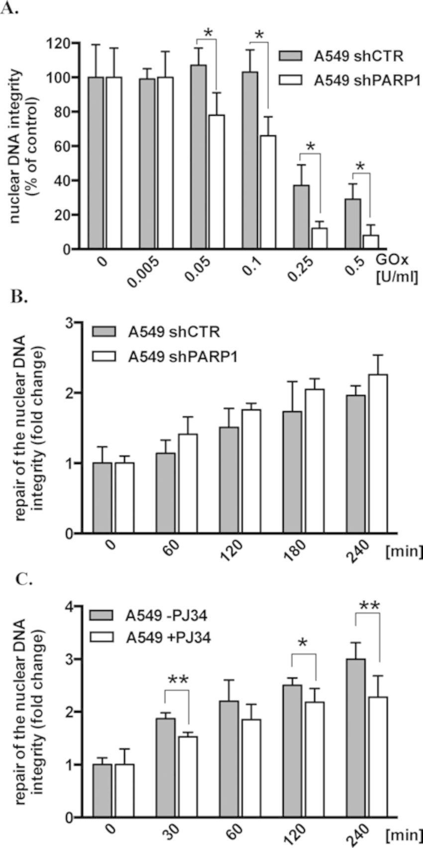 Effect of PARP1 depletion and PARP inhibition on the