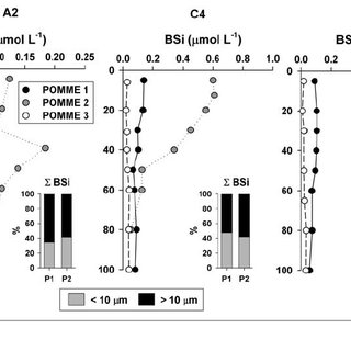 Biogenic silica ( B Si) profiles for the 0