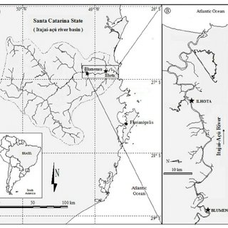 (PDF) Genotoxicity evaluation of tilapia (Oreochromis