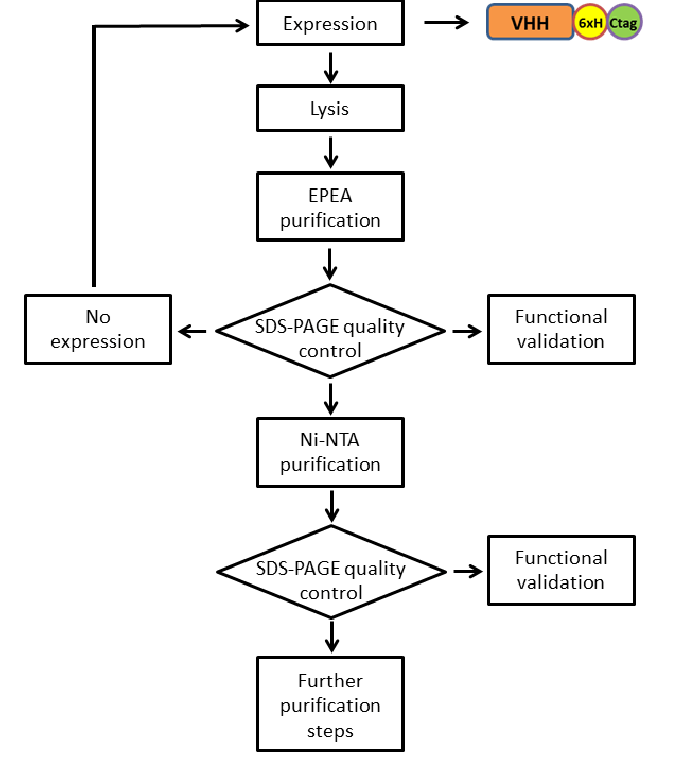 Flow-chart of the purification protocol used for