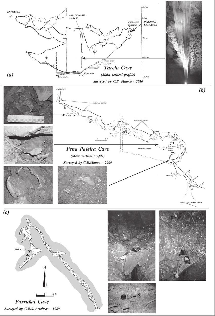 medium resolution of  a tarelo cave main vertical profile b pena paleira cave main download scientific diagram
