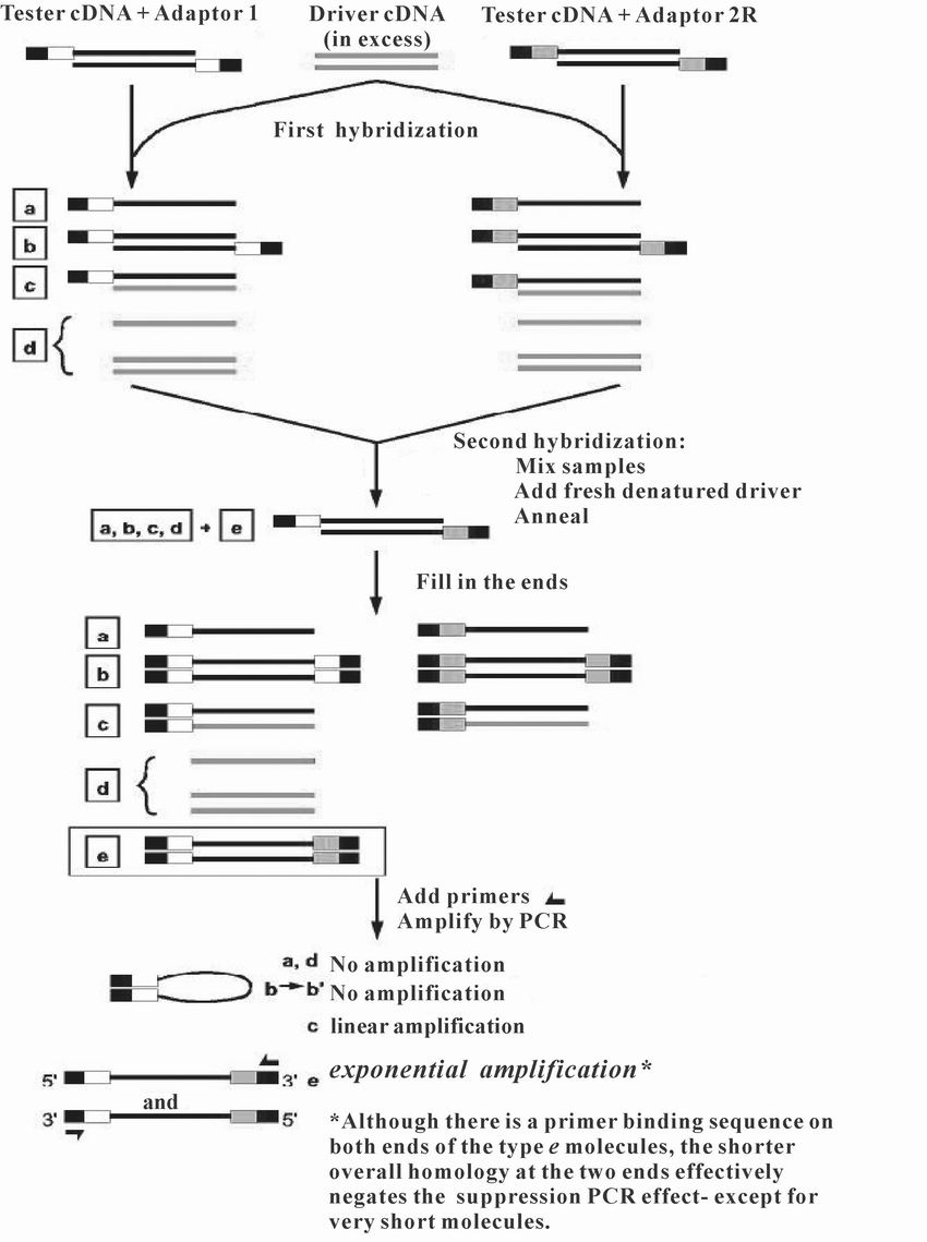 hight resolution of schematic diagram of pcr select cdna subtraction figure adopted from