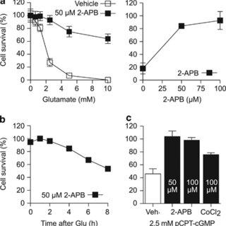 (PDF) The plasma membrane channel ORAI1 mediates