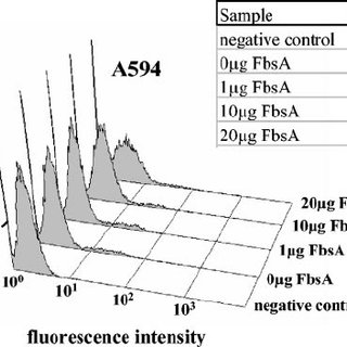 Detection of FbsA binding to the surface of A549 cells by