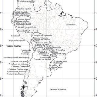 Muestra representativa de los macrorrestos de Prosopis spp