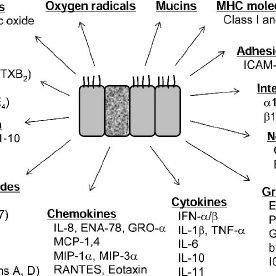 Host innate and adaptive immune responses to viral