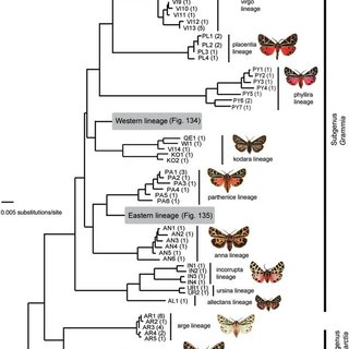 (PDF) Schmidt B. C. — Taxonomic revision of the genus