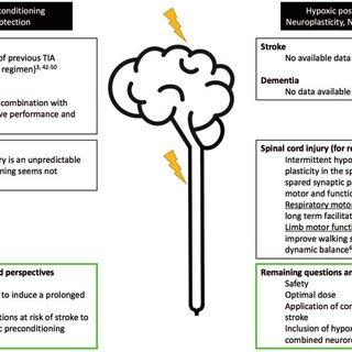 (PDF) Hypoxic conditioning and the central nervous system