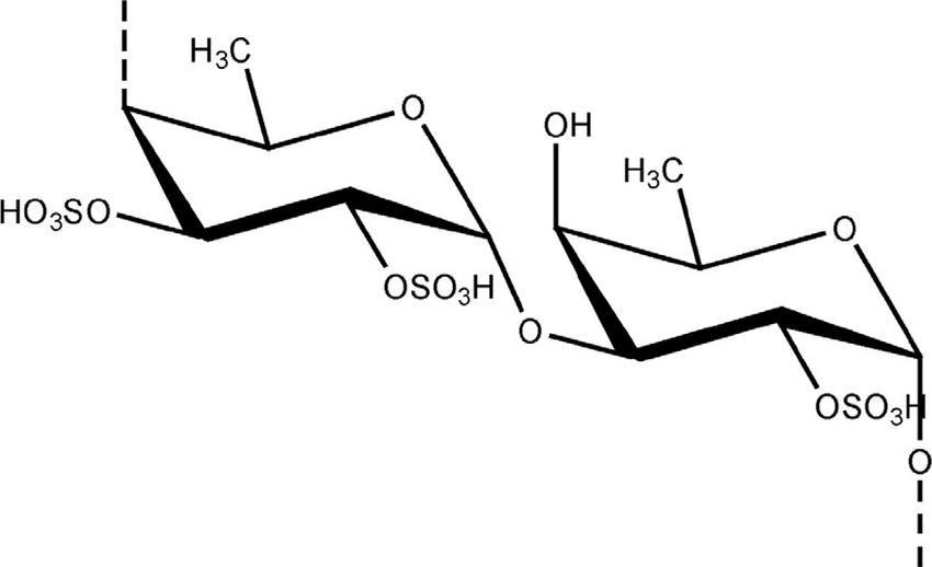 2 Fucoidan structure and repeating dimeric unit