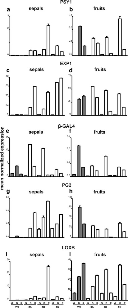 Relative expression profiles of genes related to ripening
