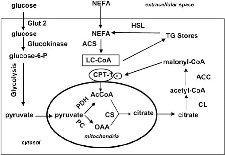 Fatty acid metabolism in the pancreatic beta cell