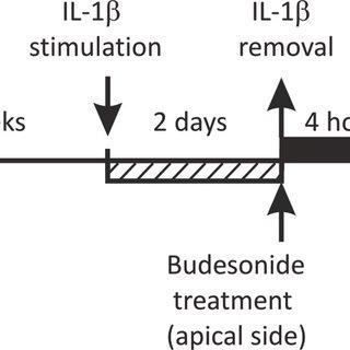 (PDF) Screening of Budesonide Nanoformulations for