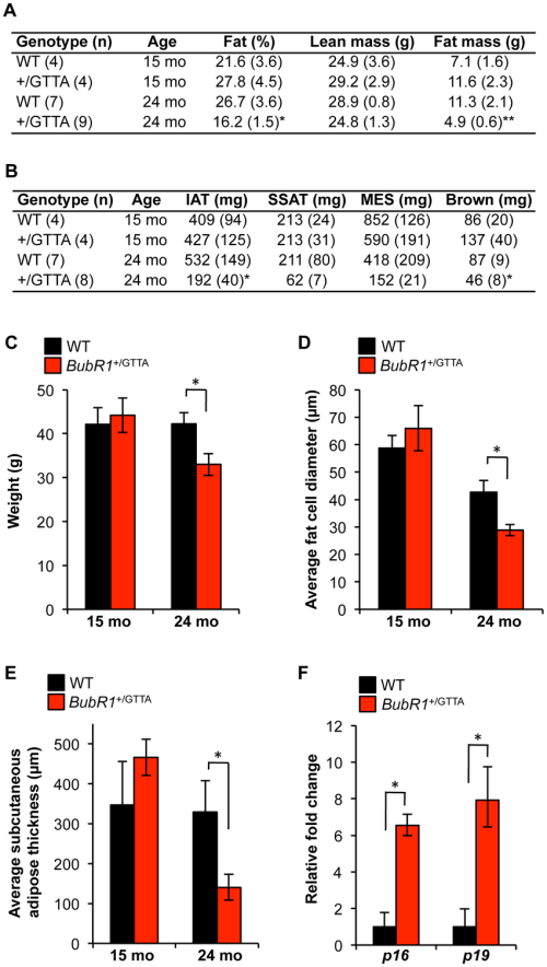 small resolution of age related fat loss in bubr1 gtta mice a body fat