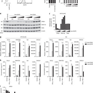 (PDF) The interferon-related developmental regulator 1 is
