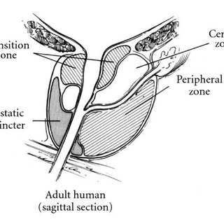 Mouse Anatomy Diagram Mouse Dissection Wiring Diagram ~ Odicis