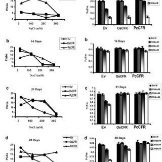 Leaf disc pigment assay of transgenic tobacco (OsCFR-line