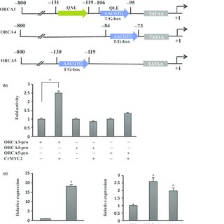 (PDF) A differentially regulated AP2/ERF transcription