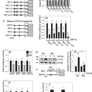 BMP-2 and TGF-β regulate GlcAT-1 promoter activity through