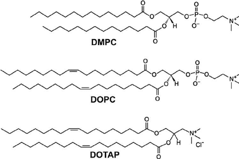 Lipid molecules used in this study. From top: DMPC, DOPC