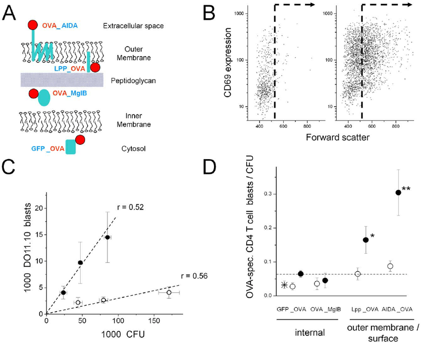 CD4 T cell responses to Salmonella expressing an ovalbumin