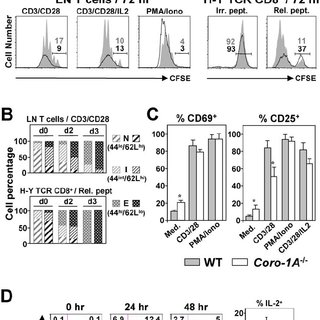 (PDF) Coronin-1A Links Cytoskeleton Dynamics to TCRαβ