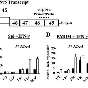Levels of H3K27me3 and acetylated H3 at MHC-I ( H-2K1