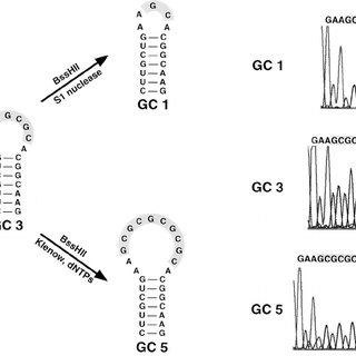 Primer extension assays and the DIS PCR strategy. (A