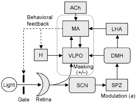 Schematic of our physiologically based computational model