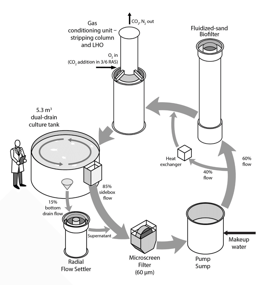 Process flow diagram of experimental RAS utilized (N = 6