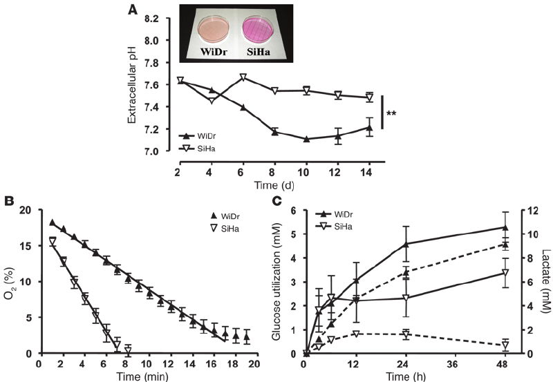 Metabolic characterization of oxidative SiHa and