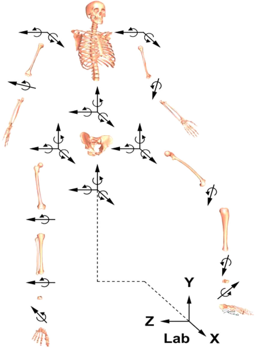 hight resolution of schematic of the 27 degree of freedom dof full body gait model used to predict novel gait motions that reduce the peak knee adduction torque