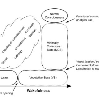 (PDF) Disentangling conscious from unconscious cognitive
