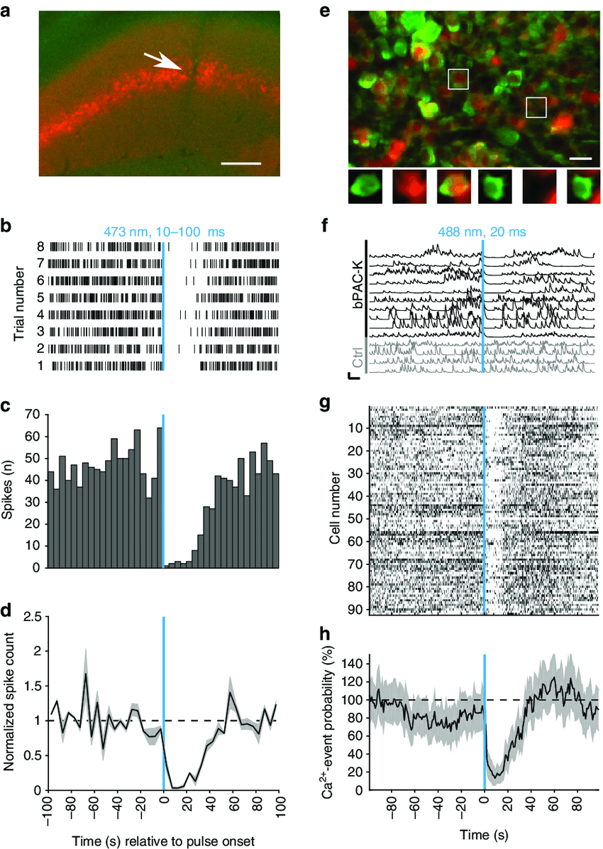 hight resolution of in vivo inhibition by the pac k silencer in mice a silicon probe track
