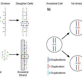 (PDF) Variation of mutational burden in healthy human