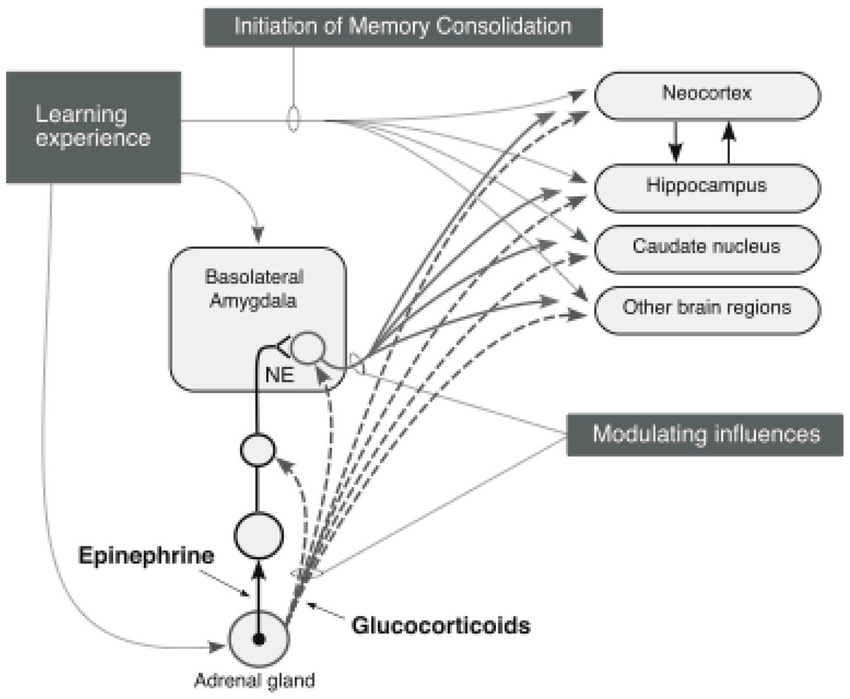 Figure 9. Schematic summarizing interactions of the