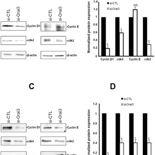 The effect of siRNA against Orai3 on thapsigargin