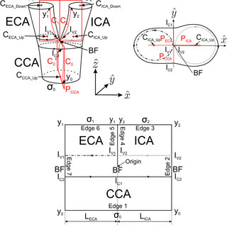 (a) Schematic diagram of the carotid arteries with the