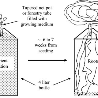 Growing lettuce by a float-support, non-circulating