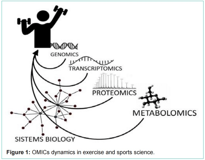 Research paper (PDF): Proteomics in Exercise and Sports