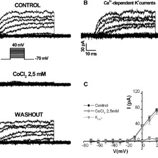 Whole-cell Ba 2? currents flowing through VOCCS in mESCs